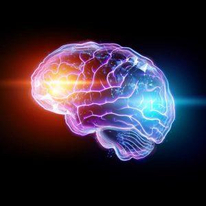 Biological Basis of Behaviour: The Nervous System