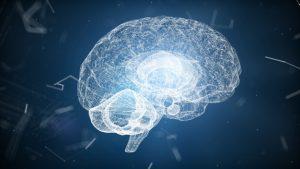 Neurotransmitters and behavior